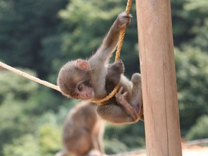 Parque dos Macacos de Arashiyama, no Japão (Foto: Creative Commons/E2Eamon)