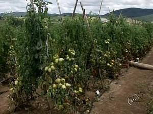 Chuva que atingiu interior de SP também prejudicou produção, diz agricultor (Foto: Reprodução/ TV TEM)