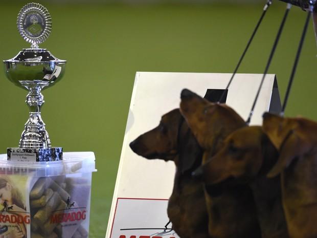 Cães observam troféu em feira na Alemanha, neste domingo (11) (Foto: AFP/ Patrik Stollarz)