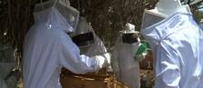 Jovens de Delmiro Gouveia aprendem a atuar com apicultura (Reprodução/TV Gazeta)