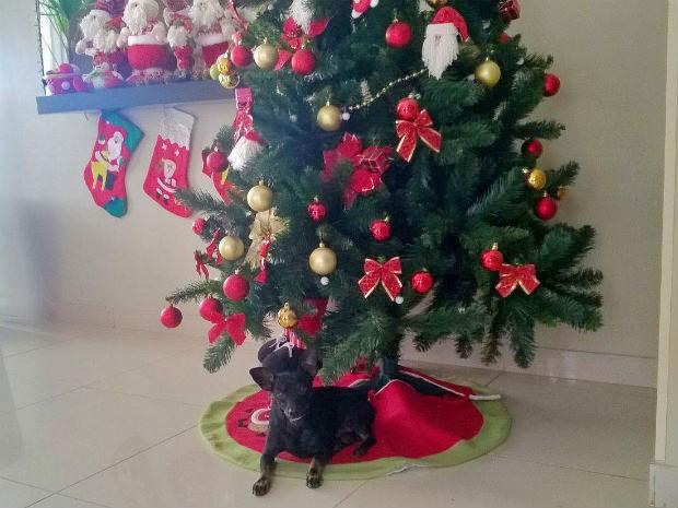 Bichinhos da Francine Galdino adoram brincar com a decoração de Natal (Foto: Arquivo pessoal)
