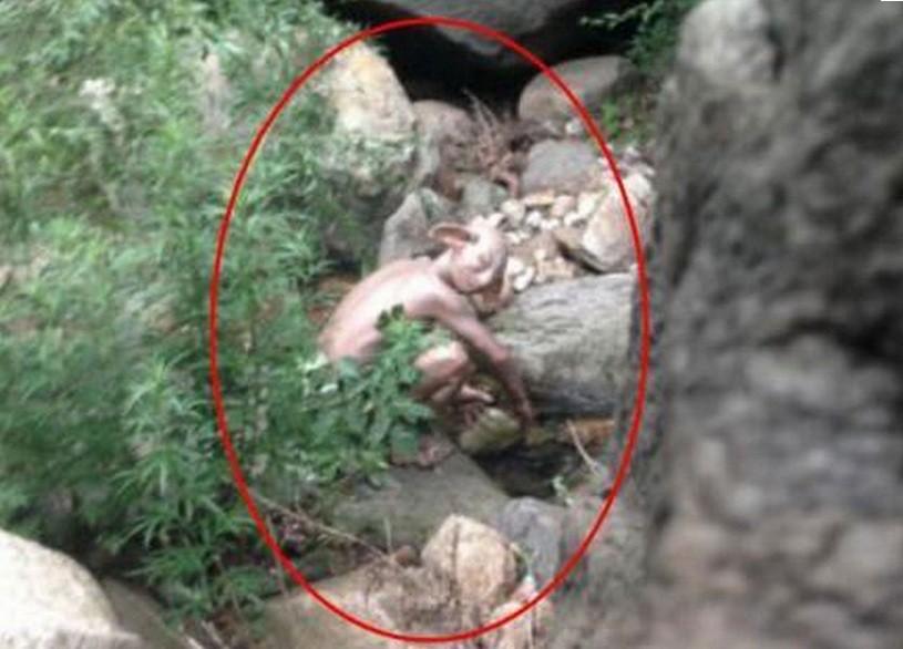 A criatura que parece o Gollum, de 'O Senhor dos Anéis', foi fotografada em um vale próximo a Pequim (Foto:  )