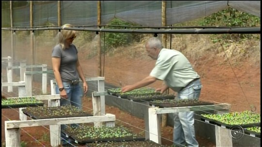 Projeto de produção de mudas ajuda pequenos produtores de Itararé