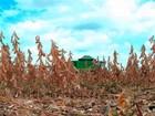 Governador decreta emergência em 10 municípios da região do Matopiba