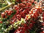 Cotação do café do ES apresenta variação negativa nesta quinta-feira