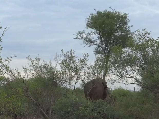 Turista flagrou elefante irritado derrubando árvore em parque sul-africano (Foto: Reprodução/YouTube/Swiatoczamigoski)