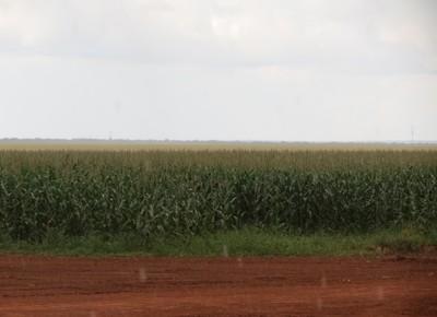 agricultura_milho_mato_grosso_chuva (Foto: Teresa Raquel Bastos / Editora Globo)