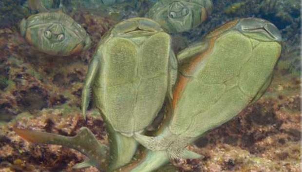 O acasalamento do Microbrachius dicki era feito com uma espécie de dança, em que a penetração ocorria de forma lateral e de 'mãos dadas'  (Foto: BBC)