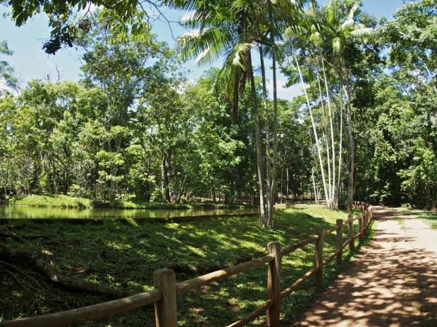 Cerca de 70% da área do parque é de vegetação nativa (Foto: Divulgação / Vale)