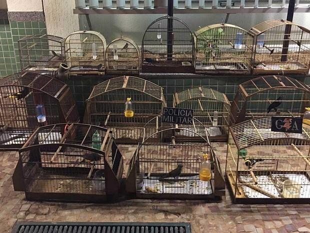 Gaiolas apreendidas em casa em Ceilândia Norte, no DF, nesta segunda-feira (13); pássaros eram criados irregularmente (Foto: Polícia Militar/Divulgação)