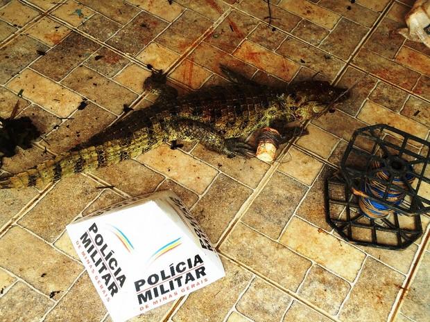 Jacaré abitado pelos 4 autores do crime (Foto: Assessoria Polícia Militar de Meio Ambiente)
