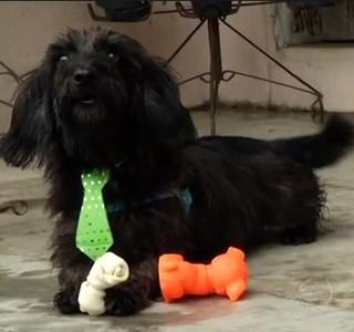 O Bernardo é um dos cães que ganhou um novo lar (Foto: Reprodução Rio Sul Revista)