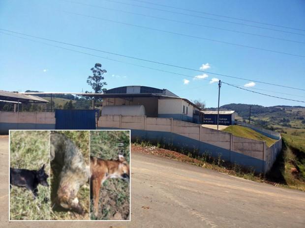 Cães foram mortos a tiros próximo a escola e laticínio em Ipuíuna (Foto: Polícia Militar)