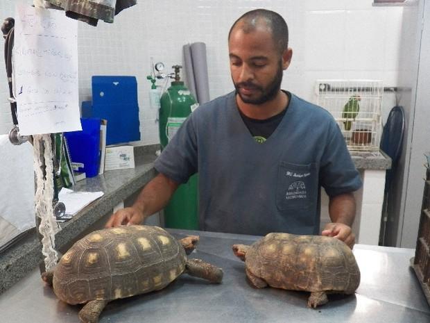 Os jabutis foram encaminhados para o hospital veterinário da Uenf (Foto: Divulgação/ Secretaria de Meio Ambiente)