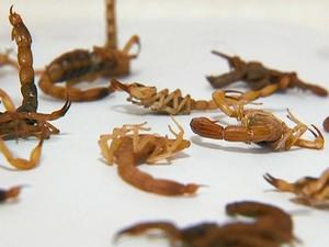 Escorpiões São João del Rei (Fot Reprodução/TV Integração)