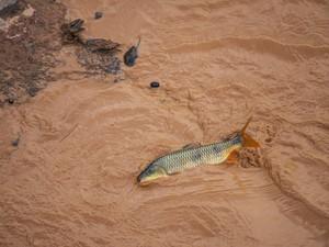 Rio Doce após o desastre ambiental (Foto: Leonardo Merçon/ Últimos Refúgios)
