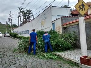 Chuva em Barra Mansa provocou queda de árvore na Rua Jaime Camargo, no bairro São Silvestre (Foto: Cristiane Mendes/G1)