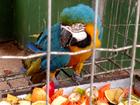 Mais de 50 animais silvestres estão disponíveis para adoção em MT