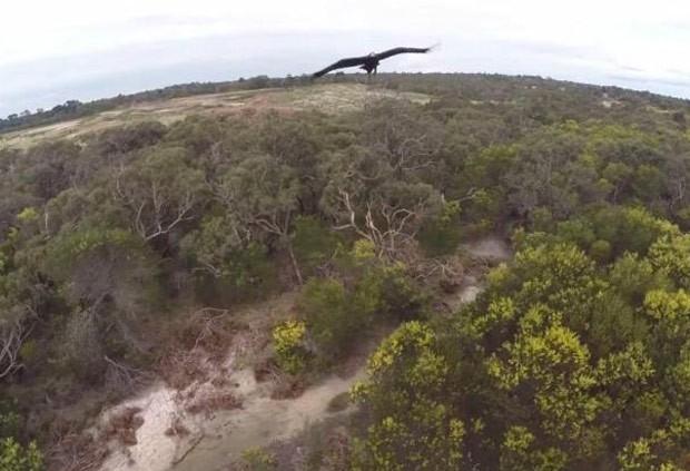 Águia atacou e derrubou drone que fazia imagens na Austrália (Foto: Reprodução/YouTube/Melbourne Aerial Video)