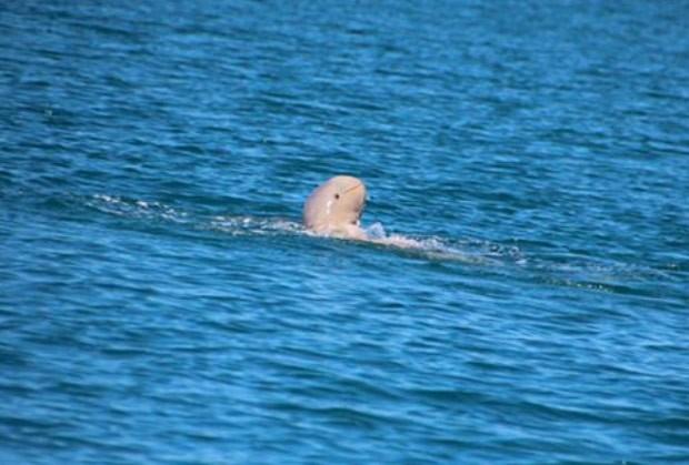 Golfinho raro é fotografado na Austrália e parece sorrir para a foto (Foto: Reprodução/Facebook/Queensland National Parks)