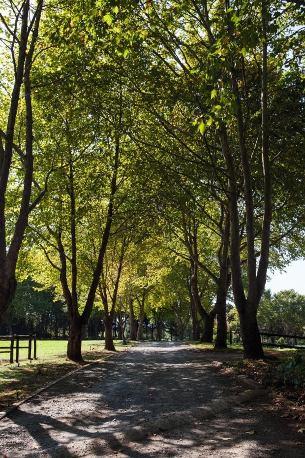 Caminho de árvores (Foto: Lufe Gomes / Editora Globo)