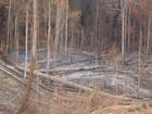 Falta de fiscalização facilita desmatamento no Pará, diz Ibama