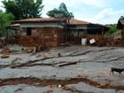 Produtores rurais têm prejuízo de R$ 23,2 mi após desastre em Mariana