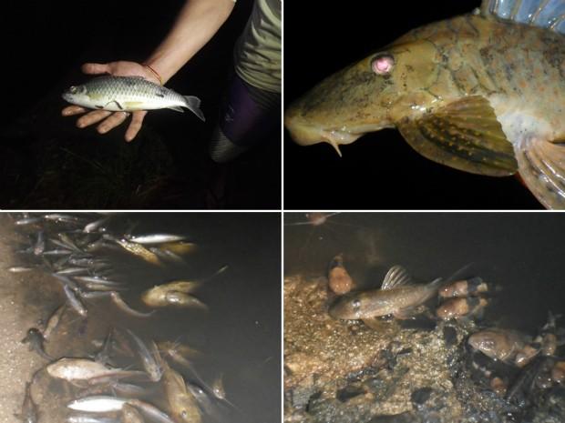 Polícia Ambiental vai investigar a mortandade de peixes no Rio Mogi Guaçu (Foto: Luiz Pitanguy)