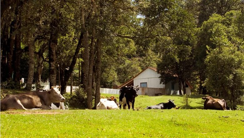 agricultura_criacao_vaca_familiar (Foto: Leandro Taques/Ed. Globo)
