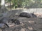 Parque Zoobotânico de Macapá pode abrir em janeiro, diz prefeitura