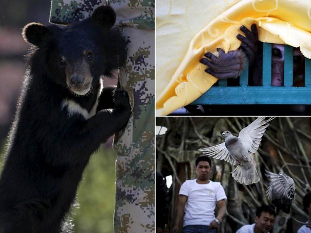 Urso, macaco e pombos são libertos em um parque nacional após serem resgatados em Kunming, na China. A polícia e um órgão de proteção animal resgataram 93 animais selvagens mantidos em mercados e restaurantes na cidade e fizeram a reintrodução na natureza (Foto: Wong Campion/Reuters)