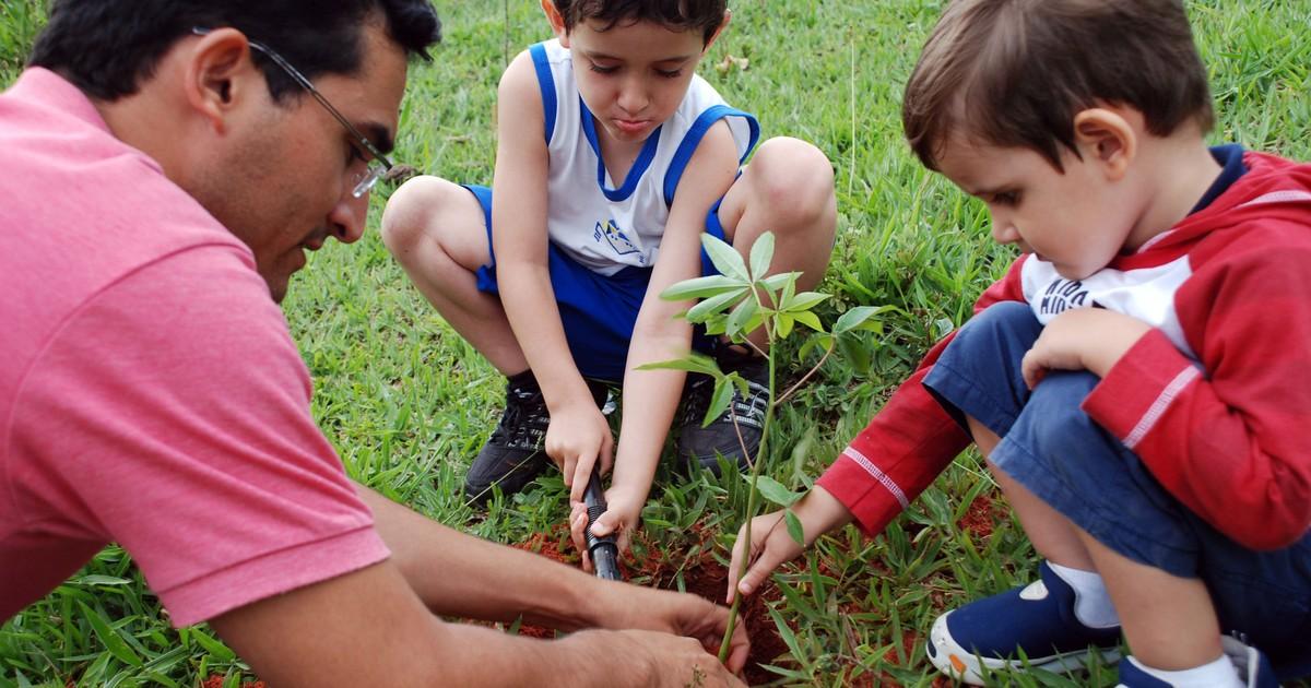 Família de Socorro, SP, cria projeto social de plantio diário de árvores - Globo.com