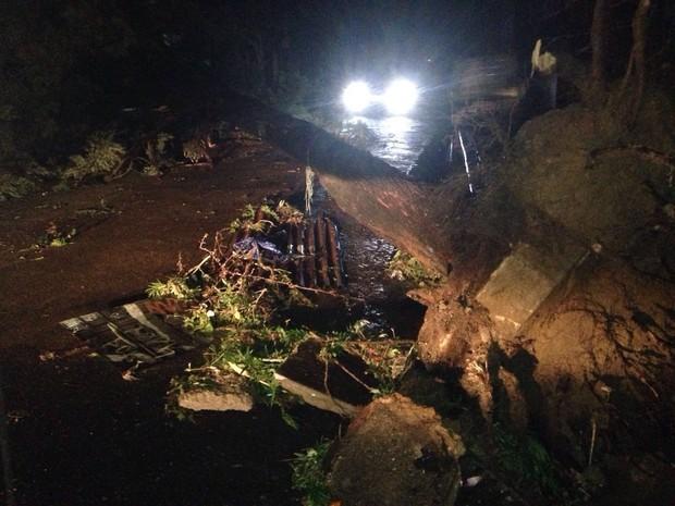 Região Central de Porto Alegre teve várias árvores caídas  (Foto: Josmar Leite/RBS TV)