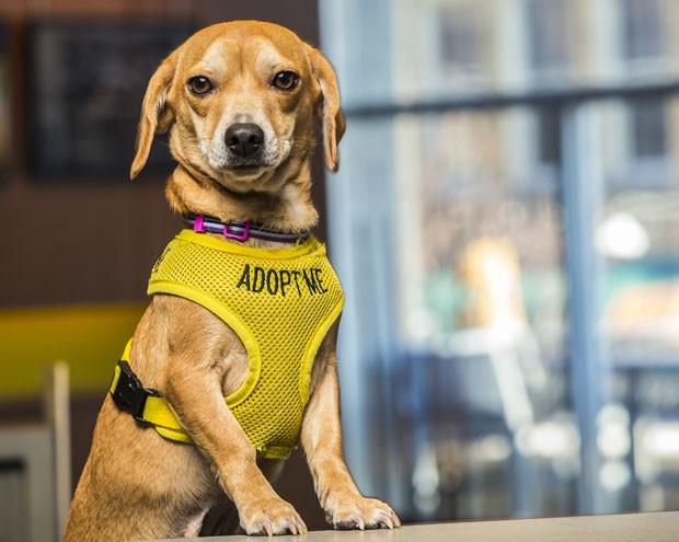 Vestindo roupas com os dizeres 'me adote', cães de um abrigo recebem hóspedes no hotel dos EUA (Foto: McKibbon Group/Divulgação)