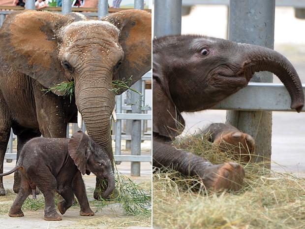 Bebê elefante 3 (Foto: Jean-François Monier/AFP)