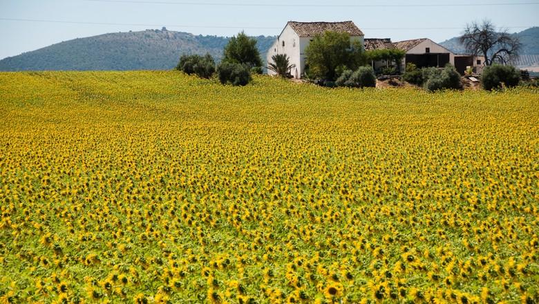 fazenda-Lya Luft- casa-crônica-infância (Foto: Thinkstock)