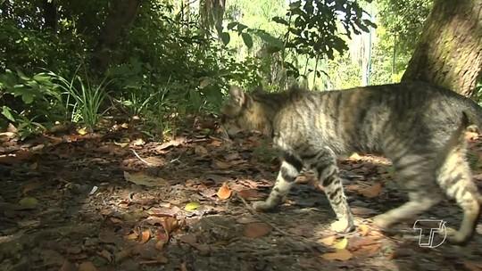 Quantidade de gatos no Parque da Cidade preocupa quem frequenta o local em Santarém