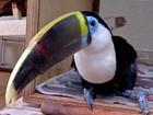 Trinta pássaros vítimas de maus-tratos são apreendidos em residência em MT