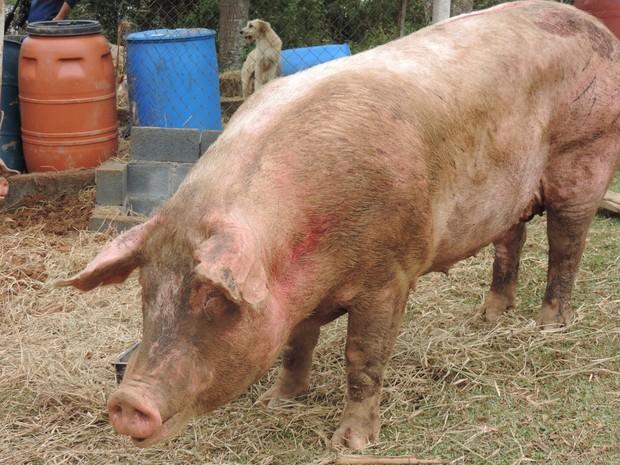 Animais ainda possuem marcas de machucados devido aos acidentes (Foto: Jomar Bellini / G1)