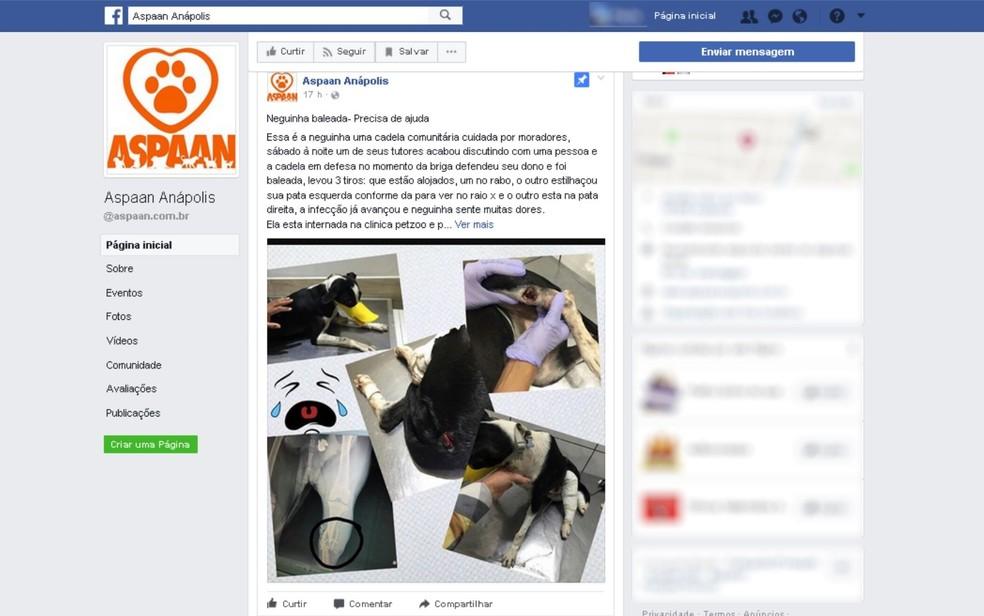 Grupo faz campanha nas redes sociais para pagar tratamento da cadela (Foto: Reprodução/Facebook)