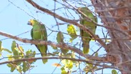 Natureza recebe papagaios que viviam em cativeiro