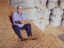 Festas juninas são como o 'Natal'  para os produtores  de amendoim  (Adriano Oliveira/G1)