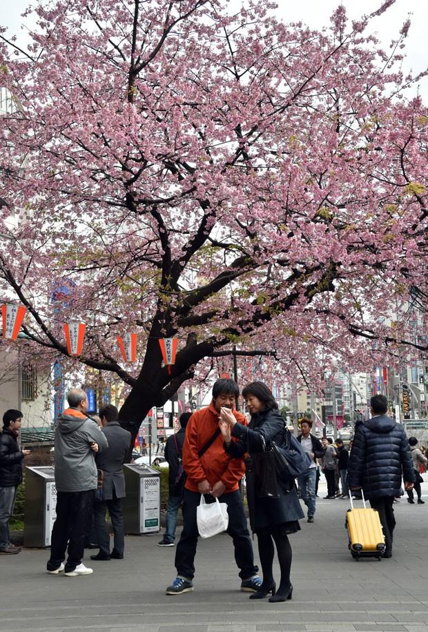 Cerejeiras ficam floridas apenas duas semanas por ano (Foto: Yoshikazu Tsuno/AFP)