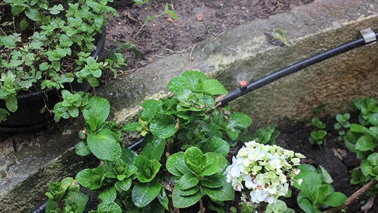 irrigação-gotejamento-horta-urbana-sao-paulo-cidades-verdes (Foto: Lucas Alencar/Ed. Globo)
