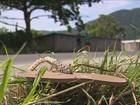Motorista mata pedestre e foge sem prestar socorro em Florianópolis