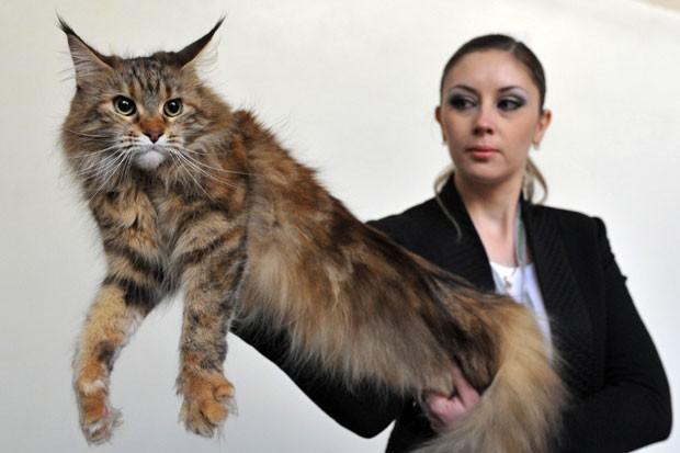 Evento reuniu apaixonados por gatos do Quirguistão (Foto: Vyacheslav Oseledko/AFP)