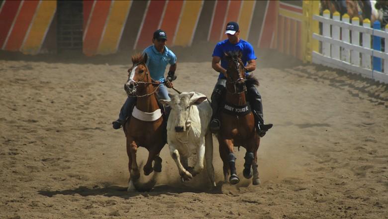 vaquejada-esporte-cavalo-equino-boi (Foto: Turismo Bahia/CCommons)