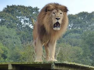 Após chegada no zoo, Rawel ganhou peso e se alimenta bem, segundo coordenadora  (Foto: Adriana Justi / G1)
