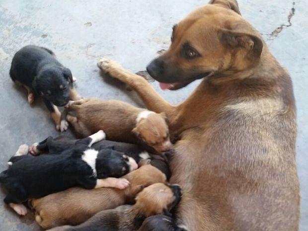 Cachorros são abandonados após reintegração de posse em Piracicaba (Foto: Reprodução/EPTV)