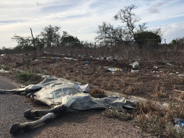 Animais não resistem à seca e morrem na zona rural de Feira de Santana (Foto: Alan Tiago Alves/G1)